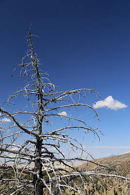 Photograph - Dead Tree And Cloud by Mary Bedy