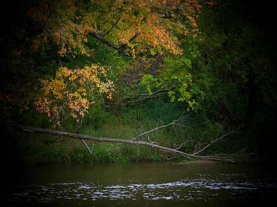 Indiana Landscapes Photograph - Dead Tree And Leaves by Michael L Kimble