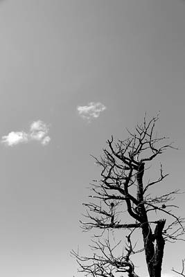 Photograph - Dead Tree And Two Clouds Bw by Mary Bedy