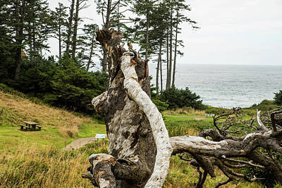 Photograph - Dead Tree At Ecola Park by Tom Cochran