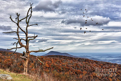 Photograph - Dead Tree At Skyline Drive by Lois Bryan