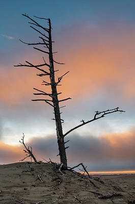 Photograph - Dead Tree At Sunset by Greg Nyquist