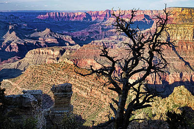 Photograph - Dead Tree At The Grand Canyon by Jerry Fornarotto