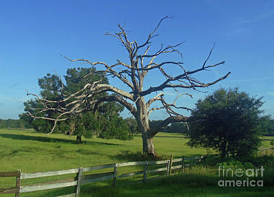 Photograph - Dead Tree Beauty by D Hackett