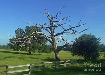 Photograph - Dead Tree Beauty by D Hackett