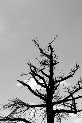 Photograph - Dead Tree Bw by Mary Bedy