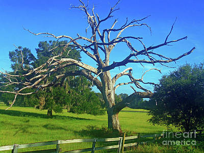 Photograph - Dead Tree  by D Hackett
