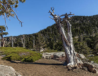 Photograph - Dead Tree by Ed Clark