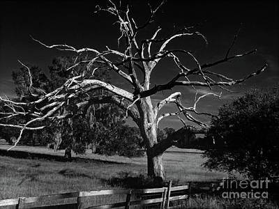 Photograph - Dead Tree In Black And White by D Hackett