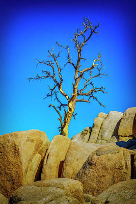 Photograph - Dead Tree In Joshua Tree Np Ca_7r2_dsc3771_17-01-19 by Greg Kluempers