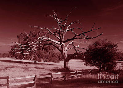 Photograph - Dead Tree In Red by D Hackett