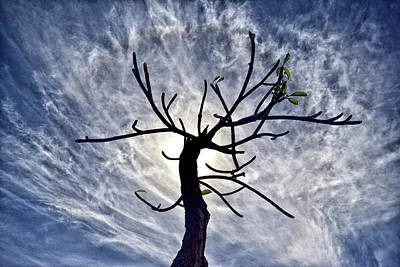 Photograph - Dead Tree In St. Johns Antigua by Bill Swartwout