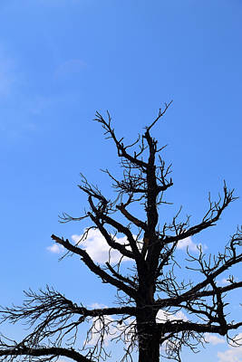 Photograph - Dead Tree by Mary Bedy