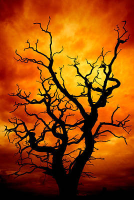 Manipulated Photograph - Dead Tree by Meirion Matthias