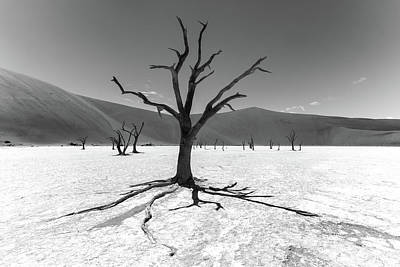 Balck And White Photograph - Dead Tree, Namibia by Reinier Snijders