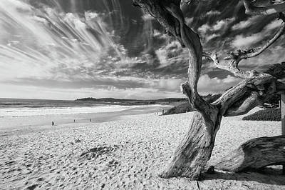 Dead Tree On The Beach Art Print by George Oze