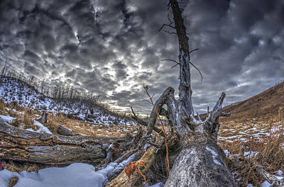 Photograph - Dead Tree by Phil Rispin