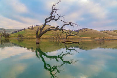 Photograph - Dead Tree Reflection by Marc Crumpler
