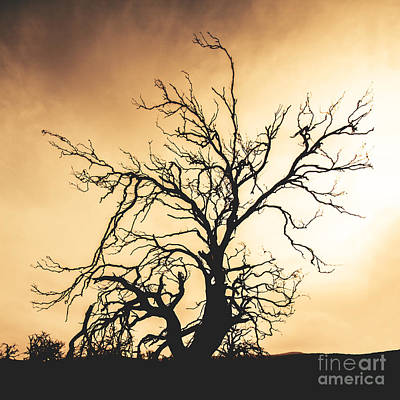 Photograph - Dead Tree Silhouette by Jorgo Photography - Wall Art Gallery