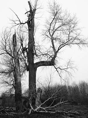 Photograph - Dead Tree Ten Mile Creek by Dutch Bieber