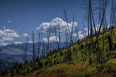 Photograph - Dead Tree Trunks With Puffy Clouds Over Mountains And Hills In Yellowstone by Randall Nyhof