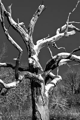 Photograph - Dead Tree - Uw Arboretum - Madison - Wi by Steven Ralser
