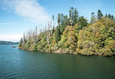 Photograph - Dead Trees Across The Umpqua River by Tom Cochran