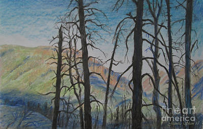 Dead Trees After A Forest Fire Art Print by Jeanette Skeem