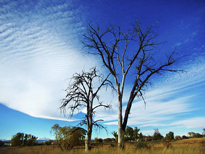 Photograph - Dead Trees And  Altostratus Clouds by Marilyn Hunt