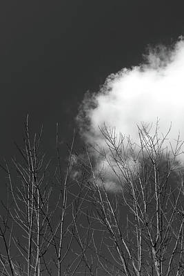 Photograph - Dead Trees And Clouds 2017 3 Bw by Mary Bedy