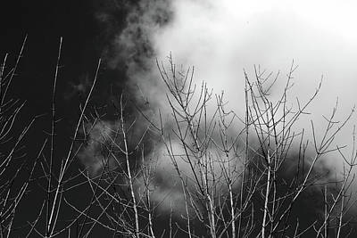 Photograph - Dead Trees And Clouds 2017 4 Bw by Mary Bedy