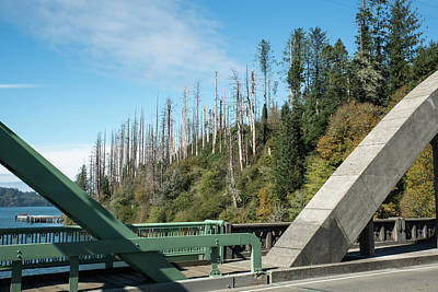 Photograph - Dead Trees By The Umpqua River Bridge by Tom Cochran