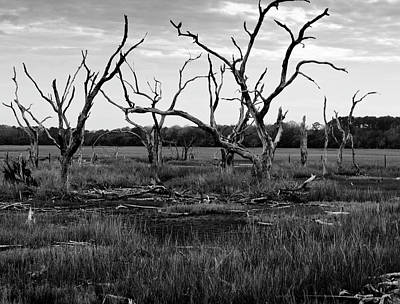 Dead Trees In Swamp Before The Storm II Art Print