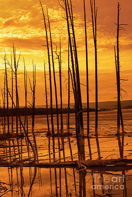 Bare Trees Photograph - Dead Trees by Juli Scalzi
