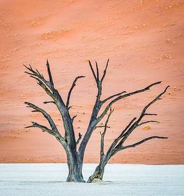 Pan Painting - Dead Vlei Tree - Camel Thorn Tree Photograph by Duane Miller