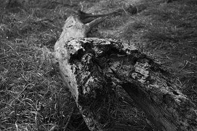 Dead Wood Art Print by Bradley Nichol