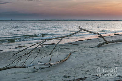 Photograph - Dead Wood Twilight by Dale Powell