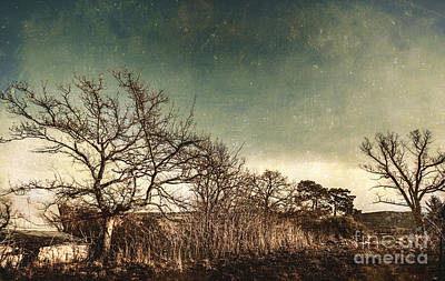 Dead Woodland Art Print by Jorgo Photography - Wall Art Gallery