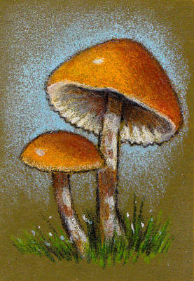 Still Life Drawings - Deadly Galerina Mushrooms in Color Pencil by Joyce Geleynse