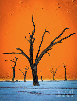 Photograph - Deadvlei Contrast by Inge Johnsson