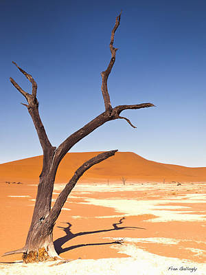 Photograph - Deadvlei by Fran Gallogly