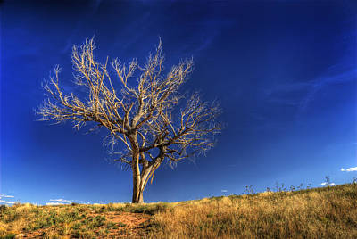 Bleached Tree Photograph - Deadwood Blues by Wayne Stadler