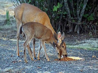 Photograph - Dear Deer by Ben Upham III