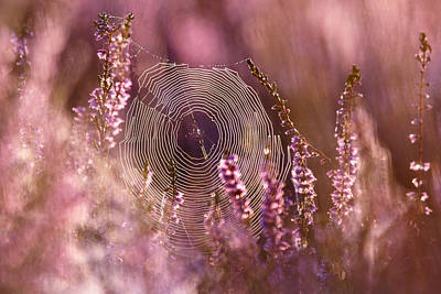 Heather Wall Art - Photograph - Dear Heather - Heath In Bloom by Roeselien Raimond