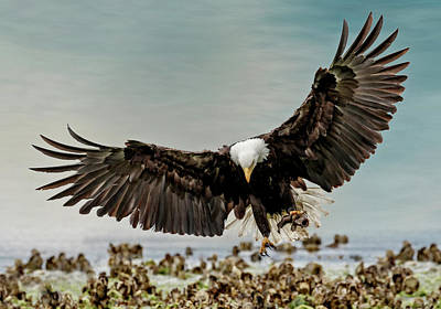 Photograph - Death By Eagle Talon by Wes and Dotty Weber