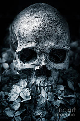 Photograph - Death Comes To Us All by Edward Fielding
