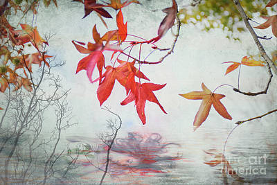 Photograph - Death In Autumn by Elaine Teague