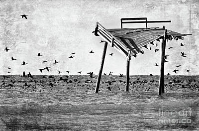 Photograph - Death Of A Friend - Frisco Pier Outer Banks Bw by Dan Carmichael