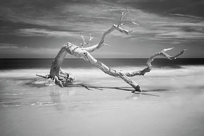 Photograph - Death Of A Tree by Jon Glaser