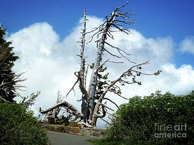 Crater Digital Art - Death Of A Tree by Methune Hively